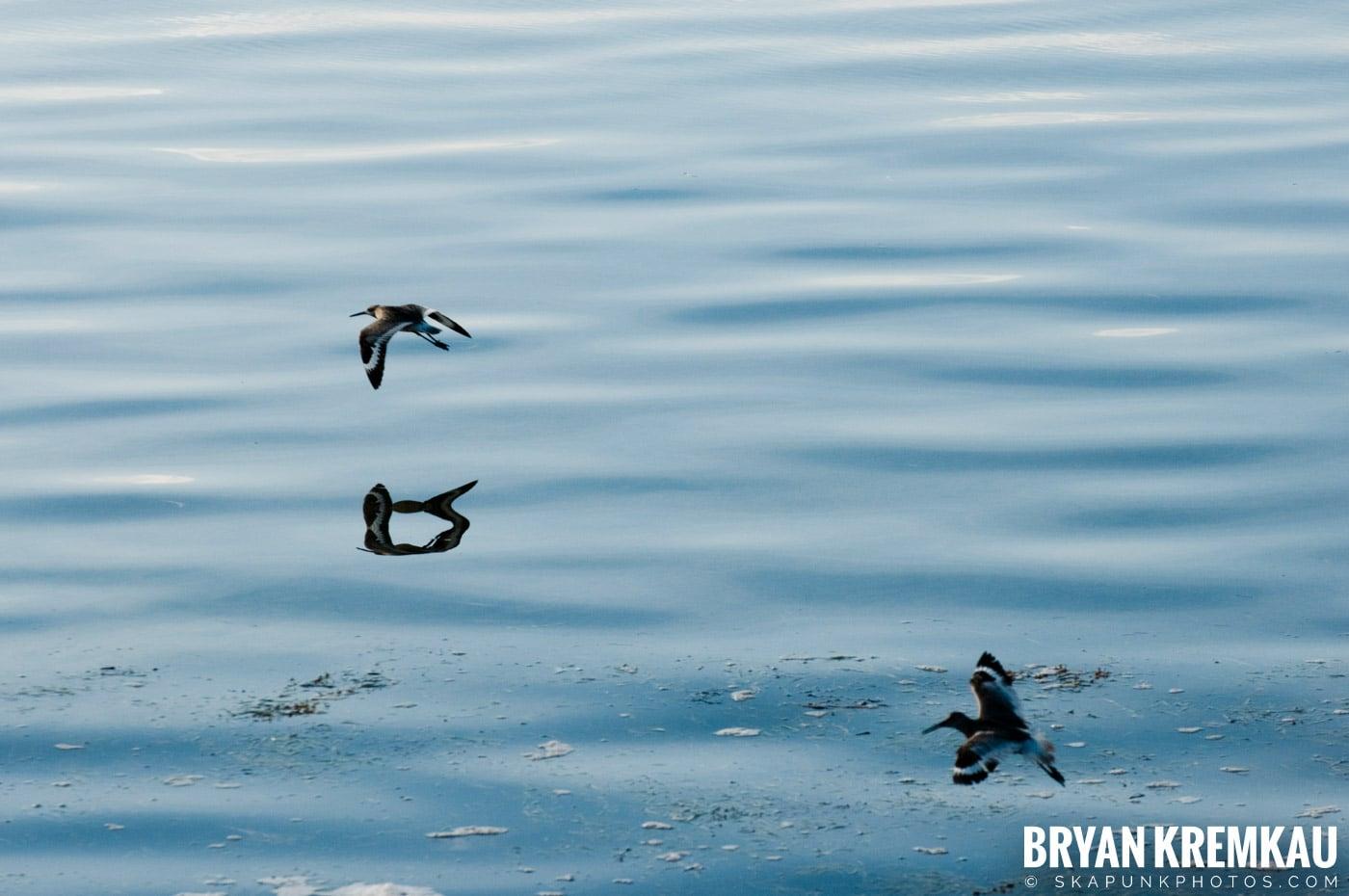 Florida Keys Vacation - 7.09.10 - 7.15.10 (64)