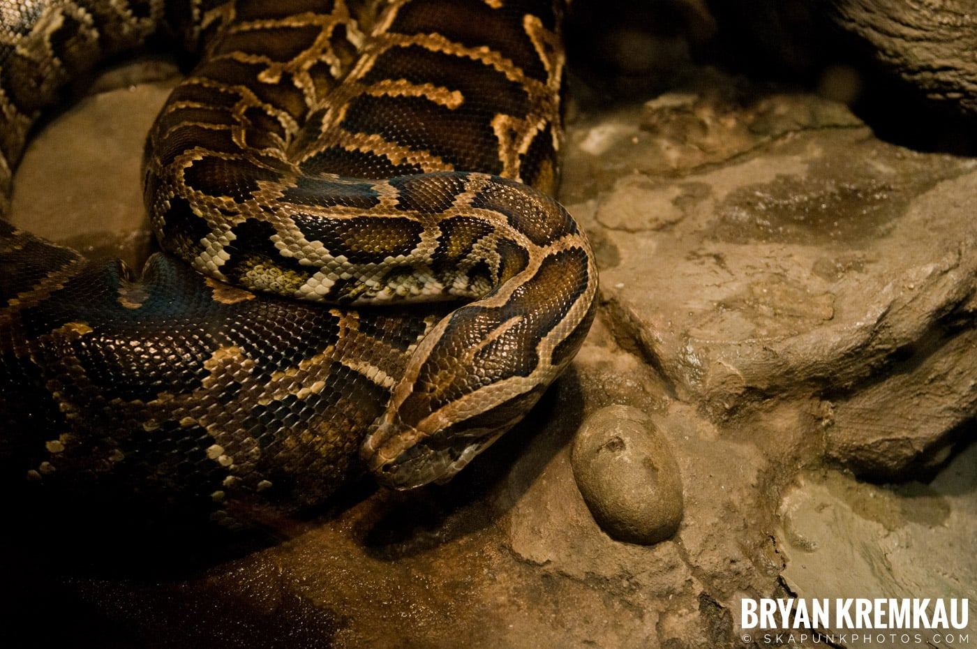 The Bronx Zoo @ Bronx, NYC - 5.7.11 (57)