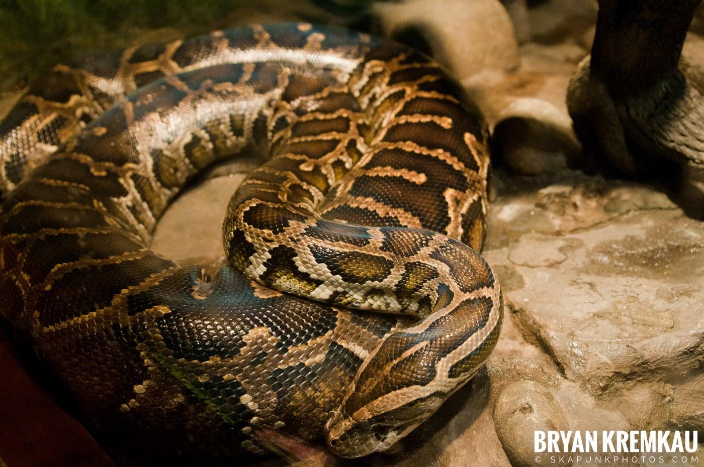 The Bronx Zoo @ Bronx, NYC - 5.7.11 (56)