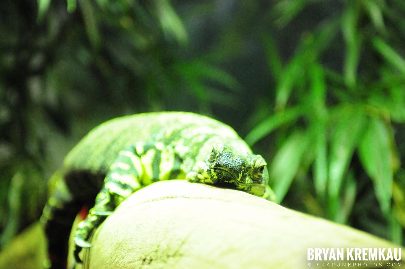 The Bronx Zoo @ Bronx, NYC - 5.7.11 (52)