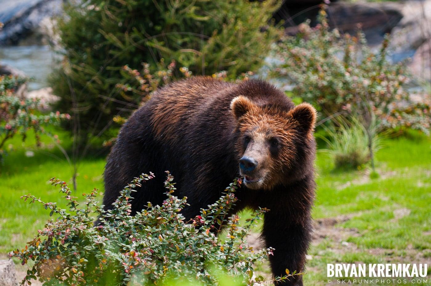 The Bronx Zoo @ Bronx, NYC - 5.7.11 (51)
