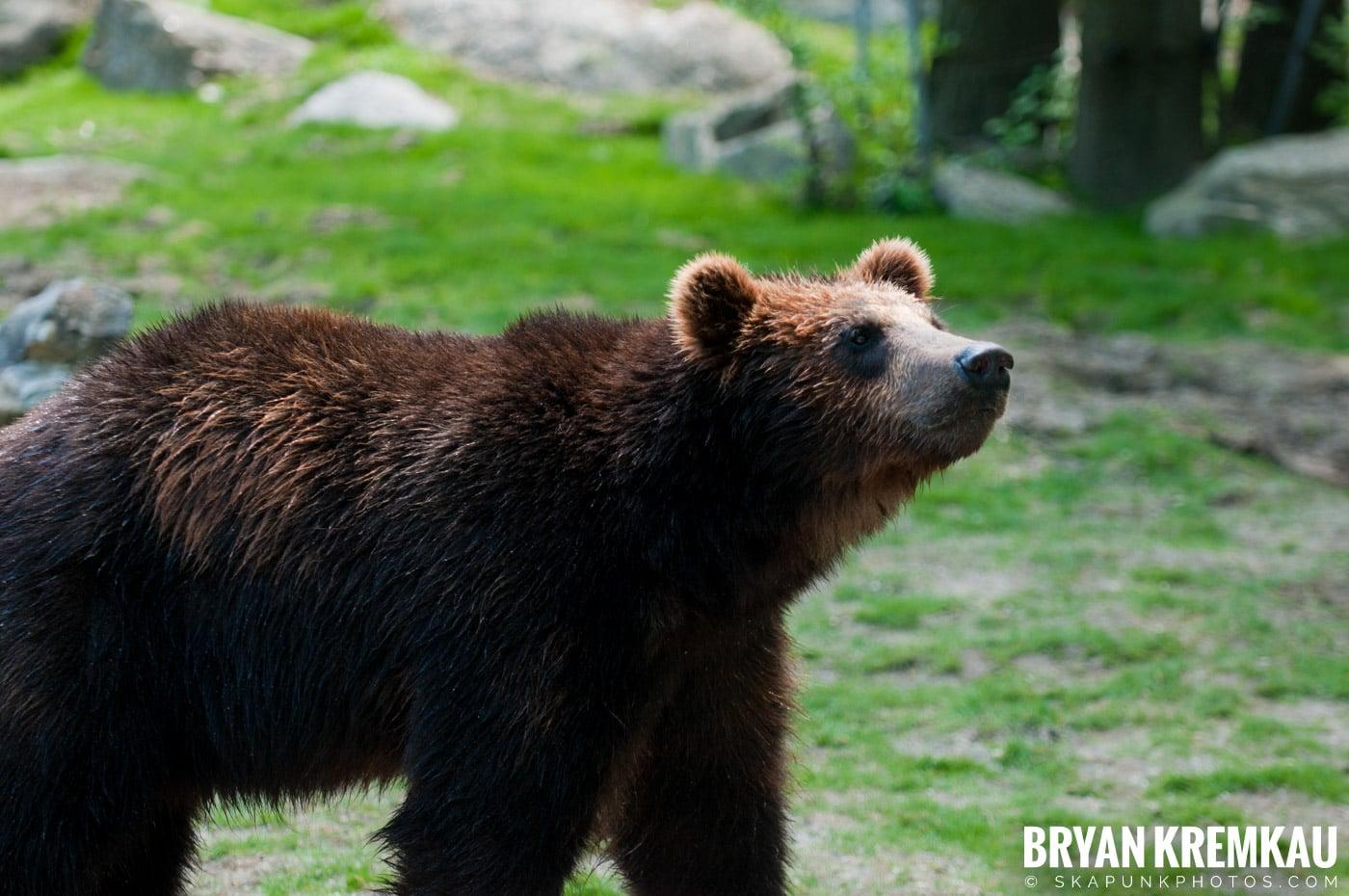 The Bronx Zoo @ Bronx, NYC - 5.7.11 (50)