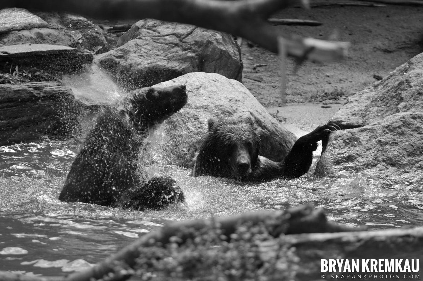 The Bronx Zoo @ Bronx, NYC - 5.7.11 (49)