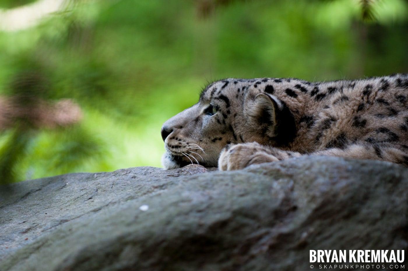 The Bronx Zoo @ Bronx, NYC - 5.7.11 (48)