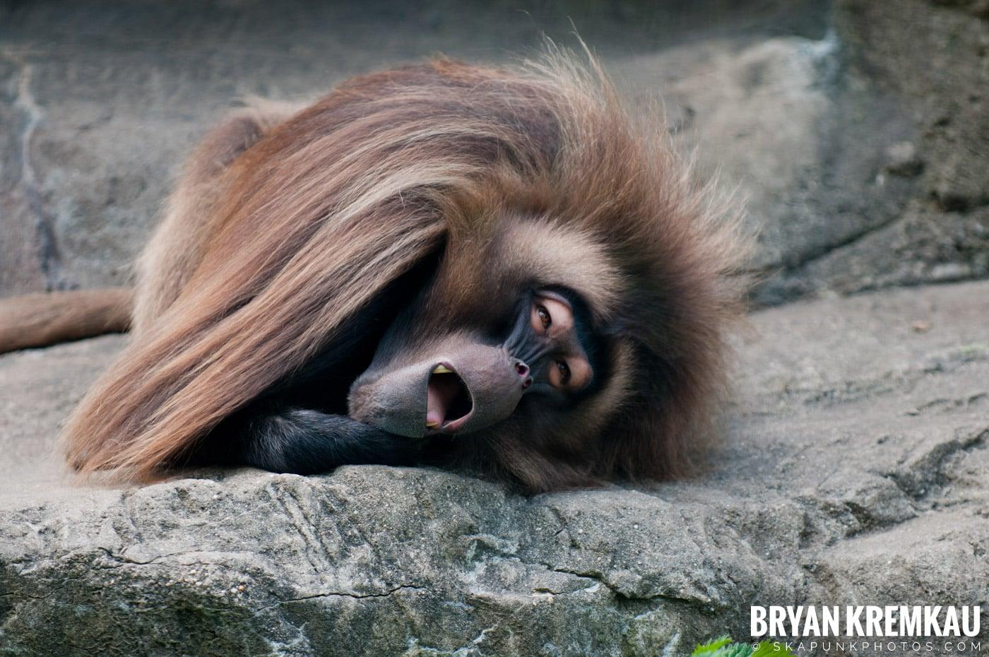 The Bronx Zoo @ Bronx, NYC - 5.7.11 (44)