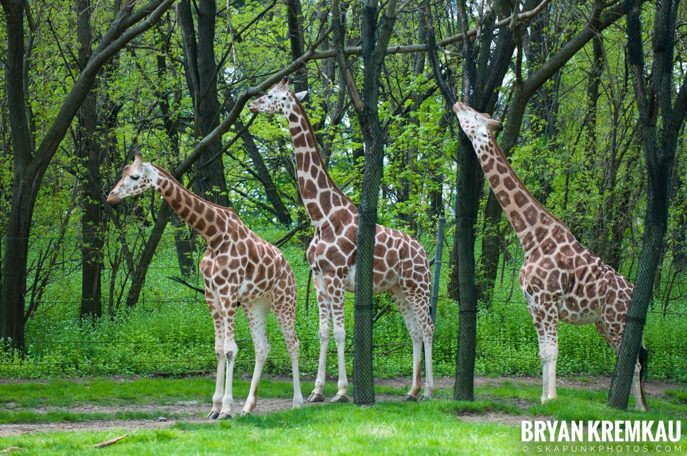 The Bronx Zoo @ Bronx, NYC - 5.7.11 (41)