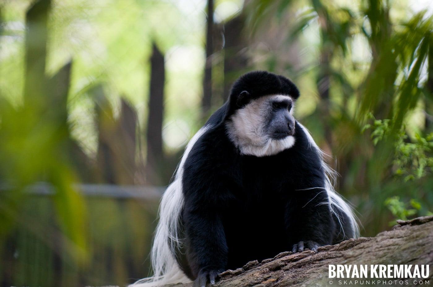 The Bronx Zoo @ Bronx, NYC - 5.7.11 (40)