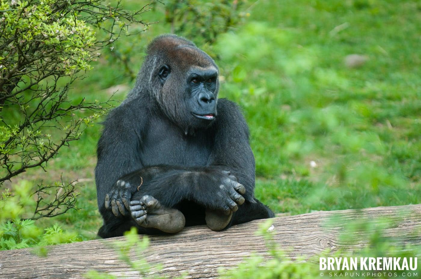 The Bronx Zoo @ Bronx, NYC - 5.7.11 (37)
