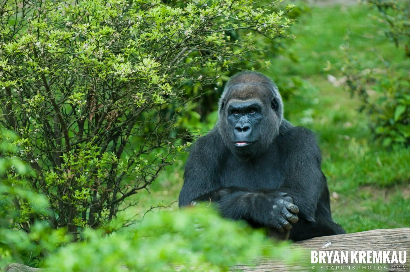The Bronx Zoo @ Bronx, NYC - 5.7.11 (36)