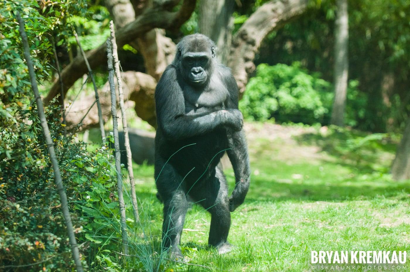 The Bronx Zoo @ Bronx, NYC - 5.7.11 (34)