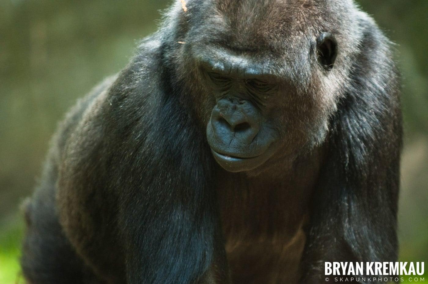 The Bronx Zoo @ Bronx, NYC - 5.7.11 (33)