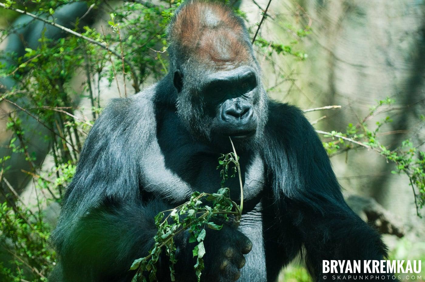 The Bronx Zoo @ Bronx, NYC - 5.7.11 (32)