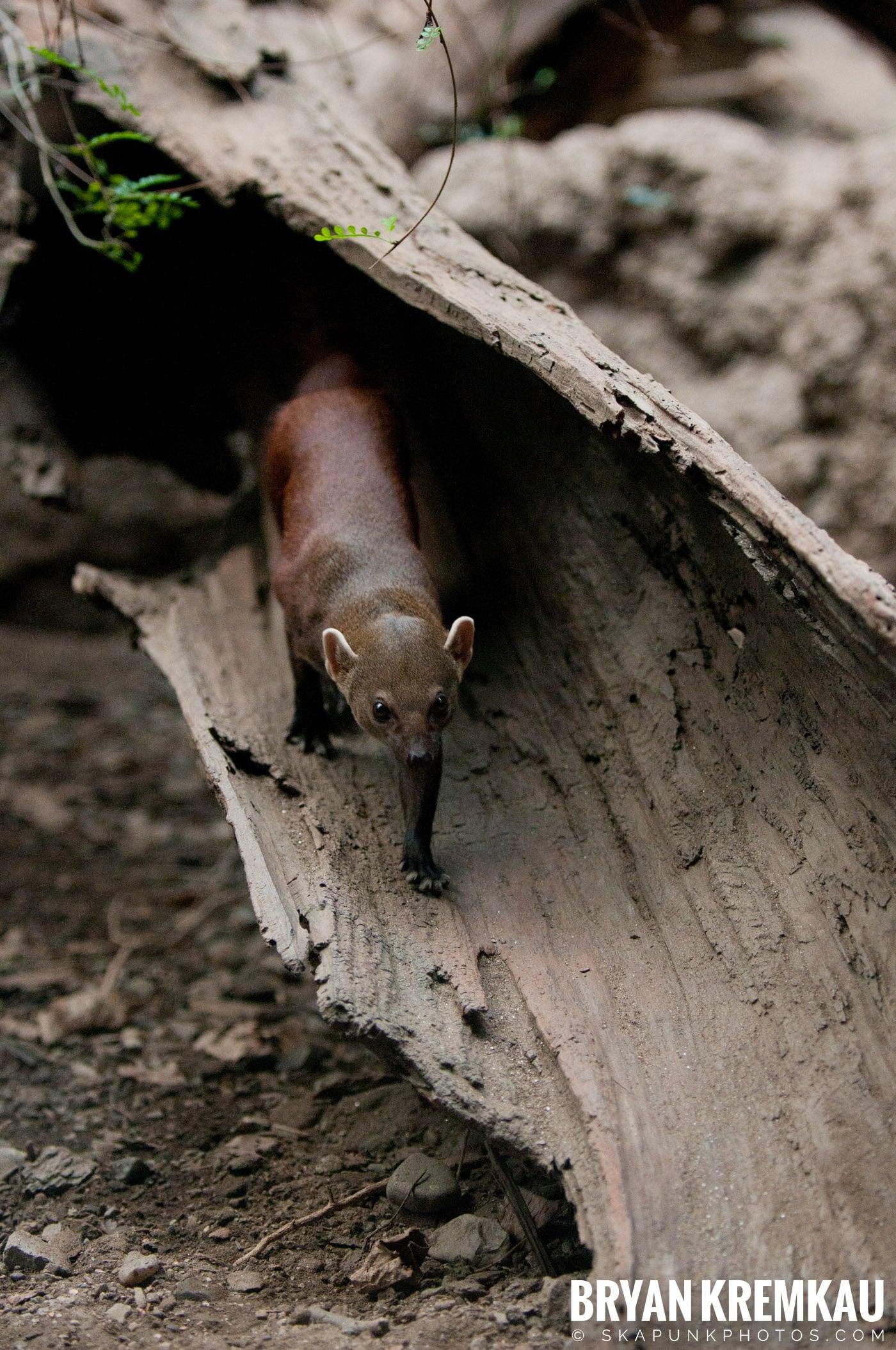 The Bronx Zoo @ Bronx, NYC - 5.7.11 (18)