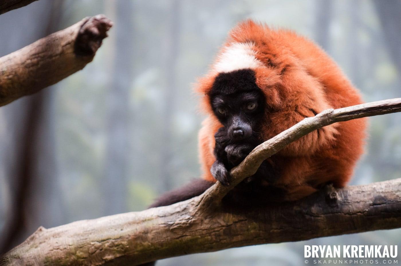 The Bronx Zoo @ Bronx, NYC - 5.7.11 (17)