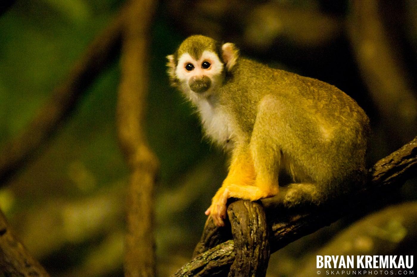 The Bronx Zoo @ Bronx, NYC - 5.7.11 (16)