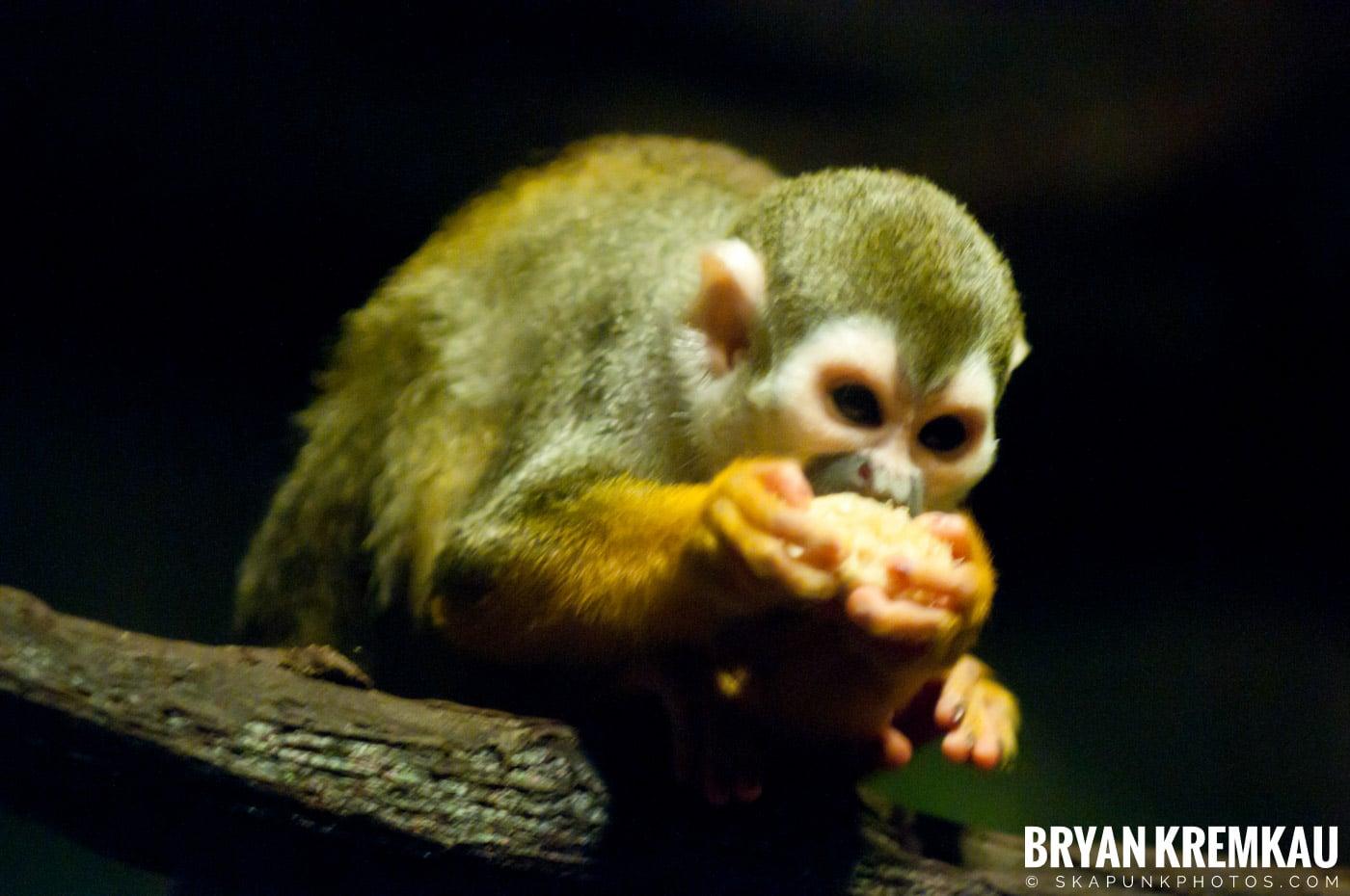 The Bronx Zoo @ Bronx, NYC - 5.7.11 (15)