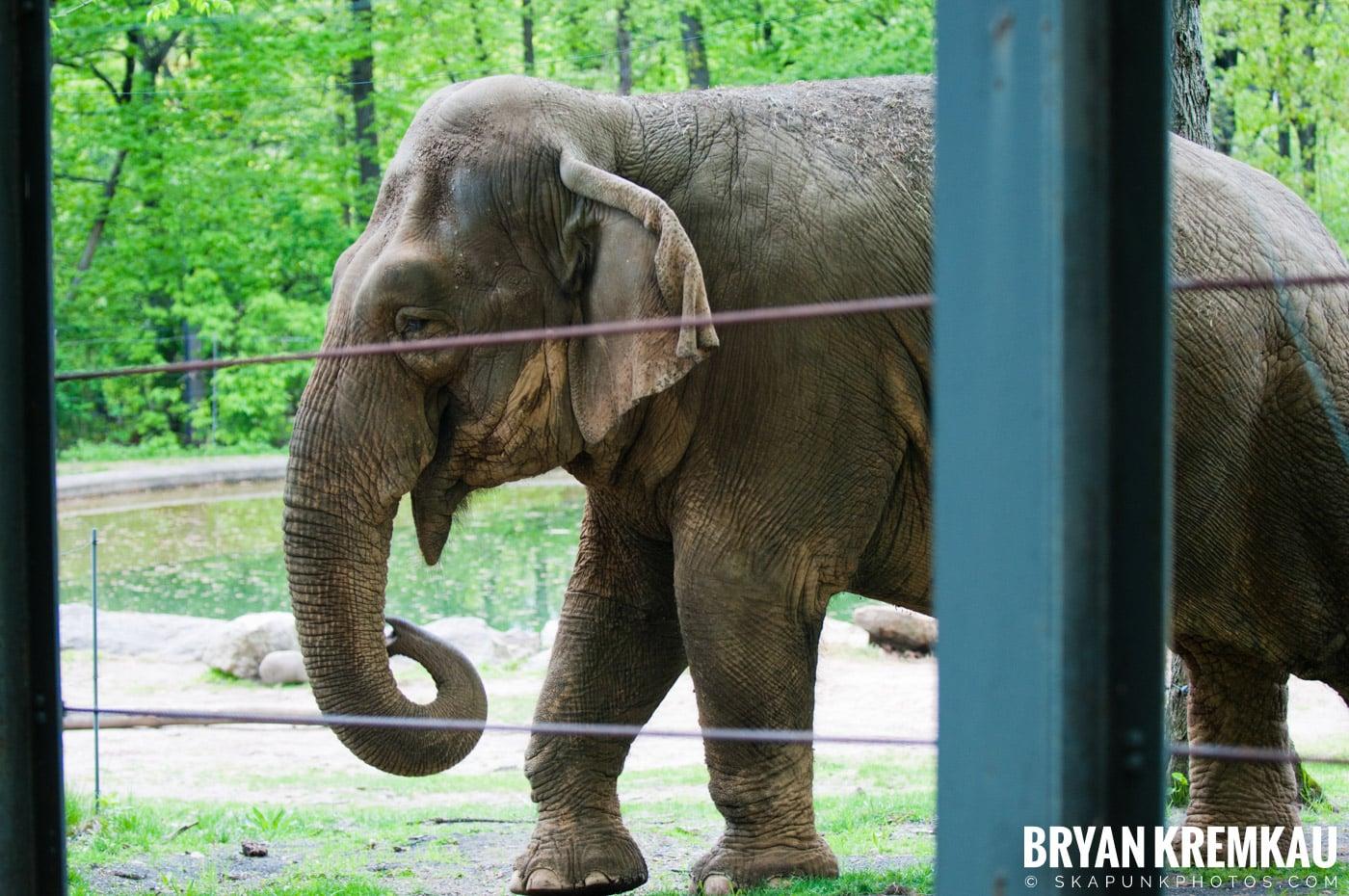 The Bronx Zoo @ Bronx, NYC - 5.7.11 (11)