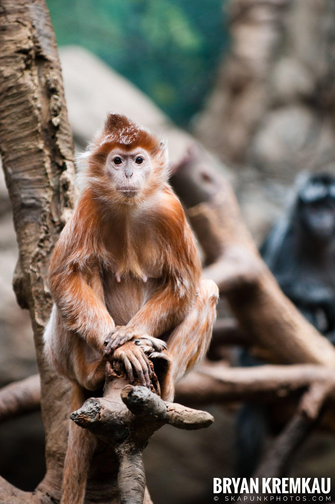 The Bronx Zoo @ Bronx, NYC - 5.7.11 (10)