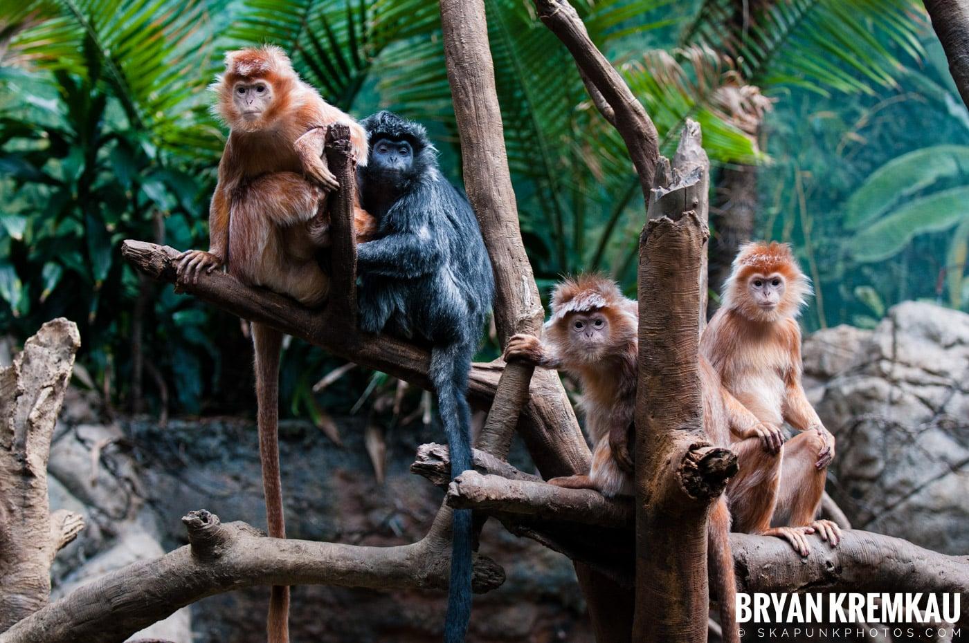 The Bronx Zoo @ Bronx, NYC - 5.7.11 (9)