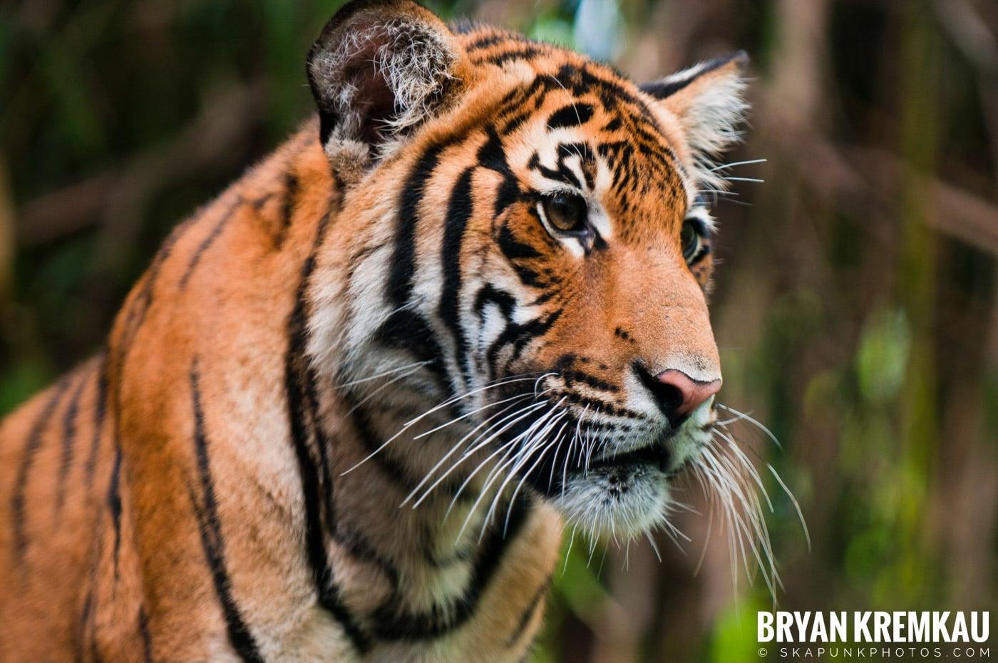 The Bronx Zoo @ Bronx, NYC - 5.7.11 (7)