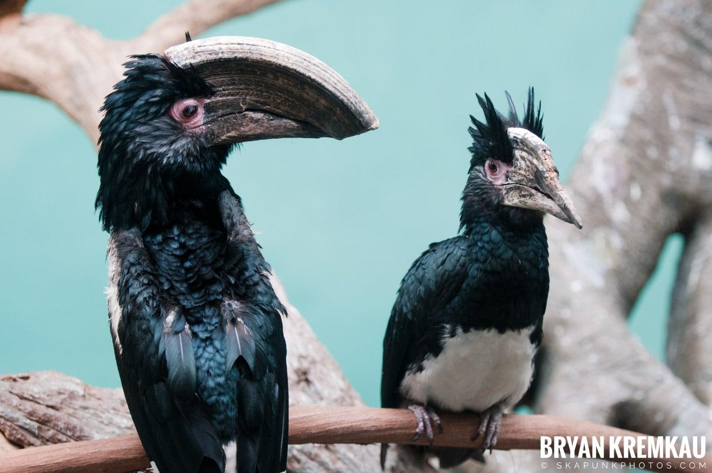 The Bronx Zoo @ Bronx, NYC - 5.7.11 (3)