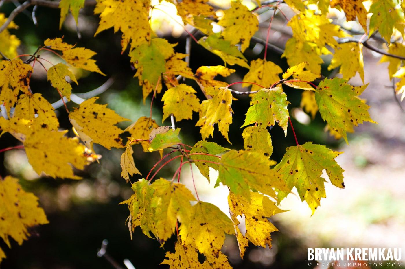 Minnewaska State Park Preserve @ Wawarsing, New York - 10.22.11 (12)
