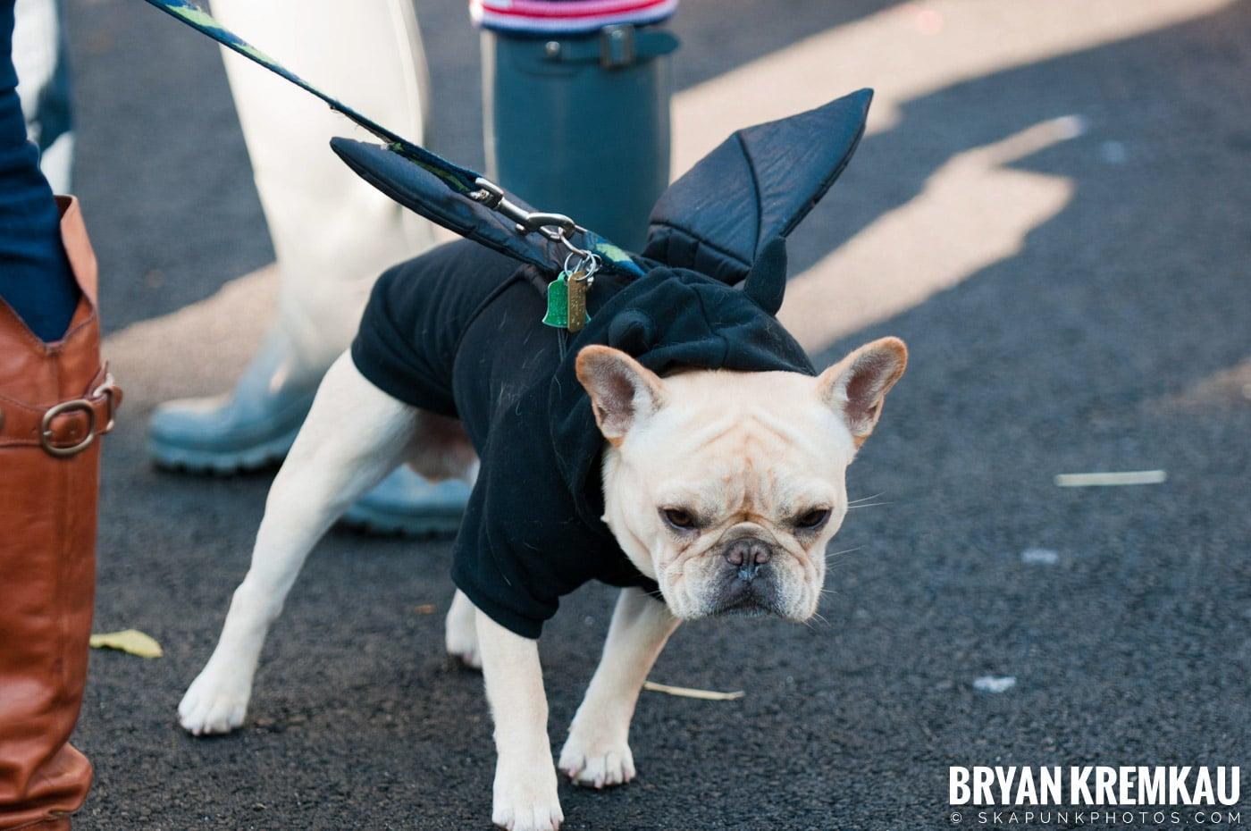 Paulus Hook Halloween Pet Parade 2011 @ Jersey City, NJ - 10.30.11 (71)