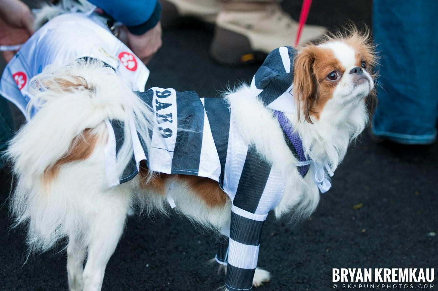 Paulus Hook Halloween Pet Parade 2011 @ Jersey City, NJ - 10.30.11 (70)