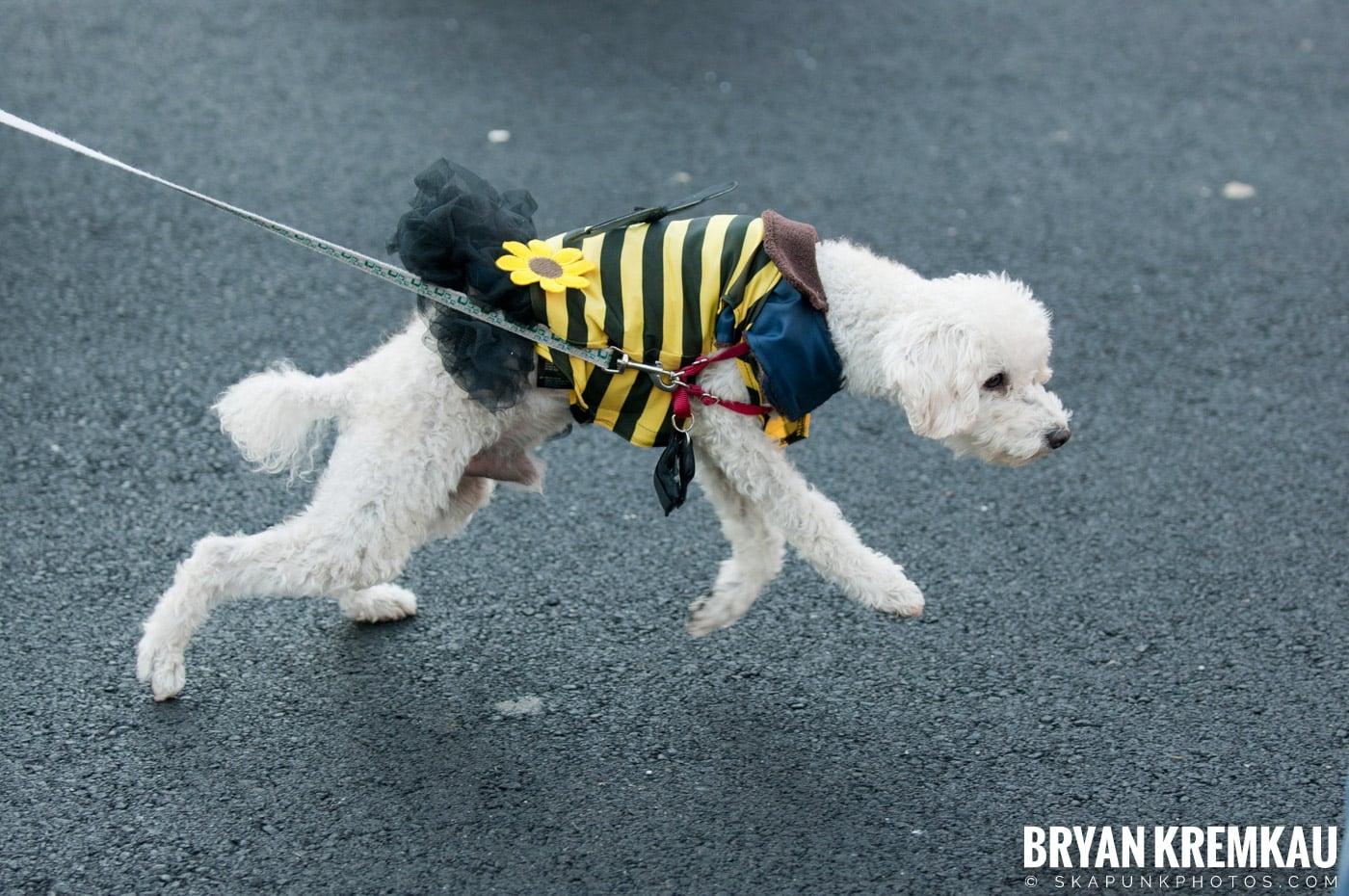 Paulus Hook Halloween Pet Parade 2011 @ Jersey City, NJ - 10.30.11 (69)