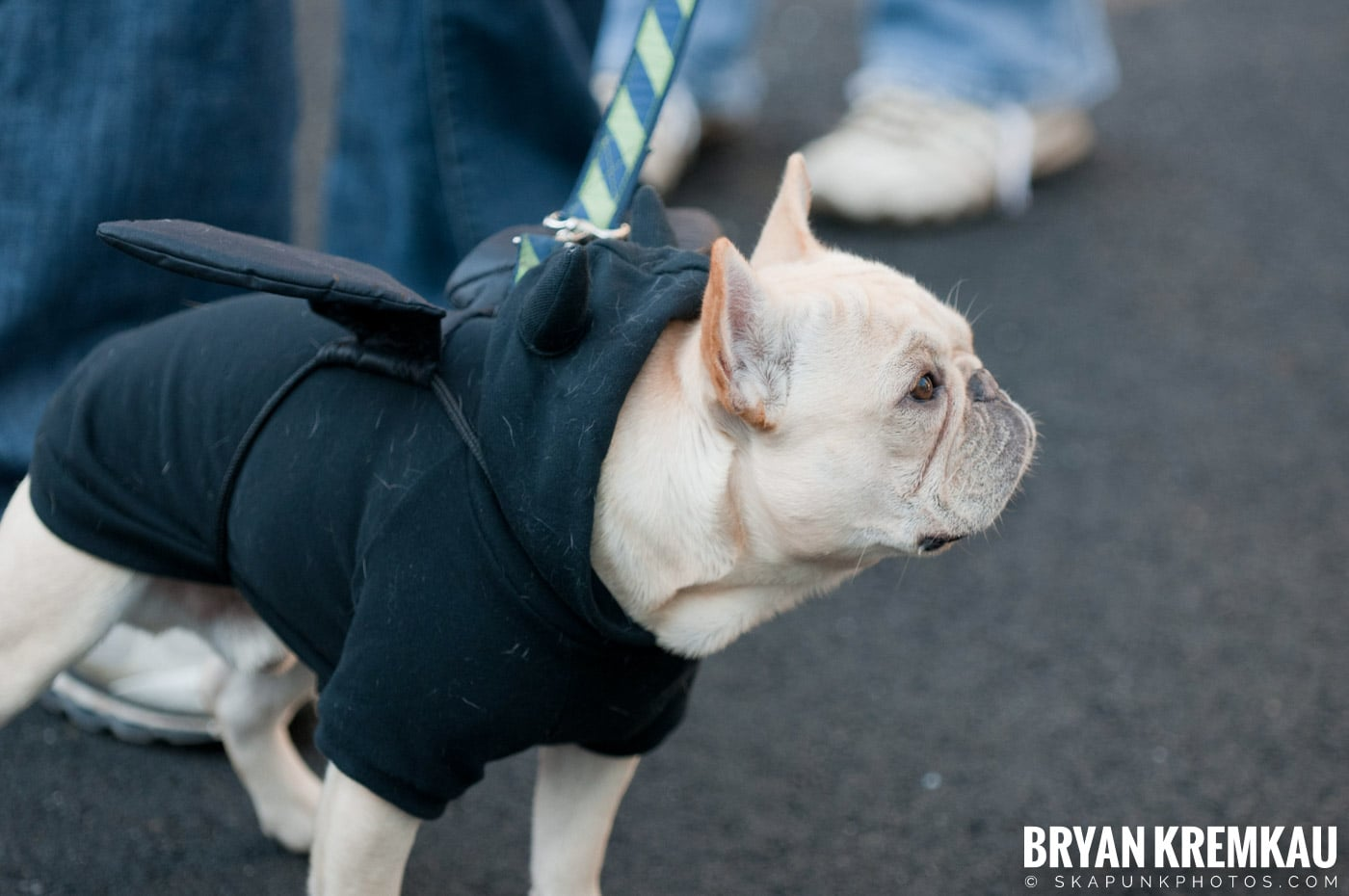 Paulus Hook Halloween Pet Parade 2011 @ Jersey City, NJ - 10.30.11 (68)
