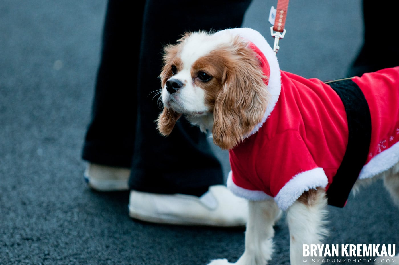 Paulus Hook Halloween Pet Parade 2011 @ Jersey City, NJ - 10.30.11 (66)
