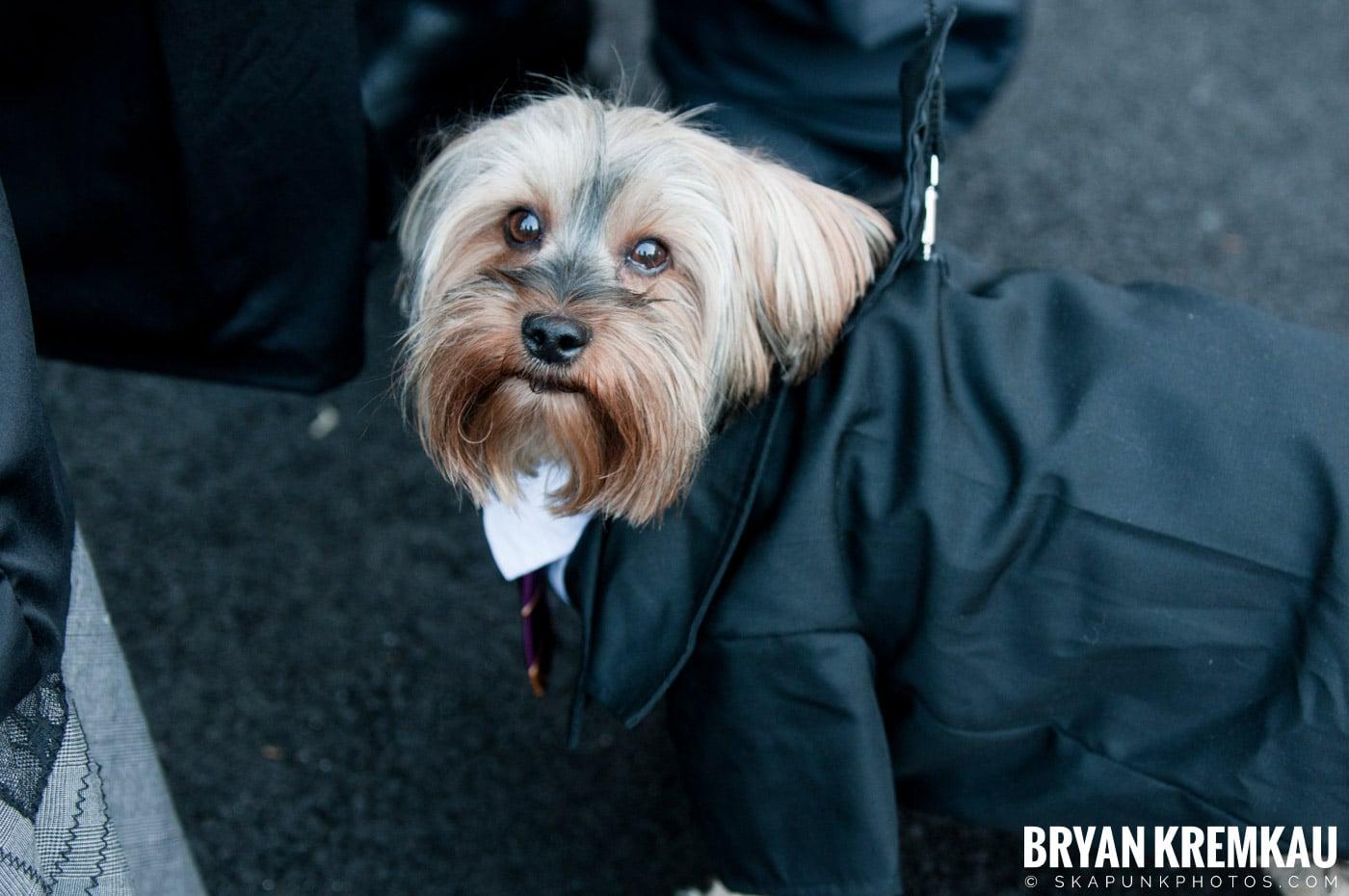 Paulus Hook Halloween Pet Parade 2011 @ Jersey City, NJ - 10.30.11 (65)