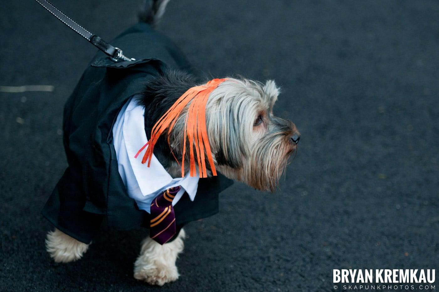 Paulus Hook Halloween Pet Parade 2011 @ Jersey City, NJ - 10.30.11 (63)