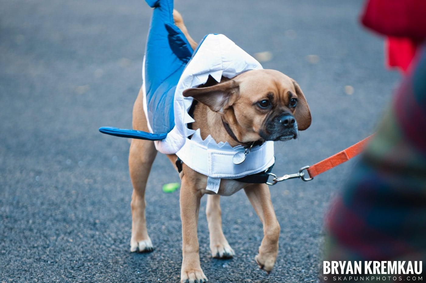 Paulus Hook Halloween Pet Parade 2011 @ Jersey City, NJ - 10.30.11 (57)