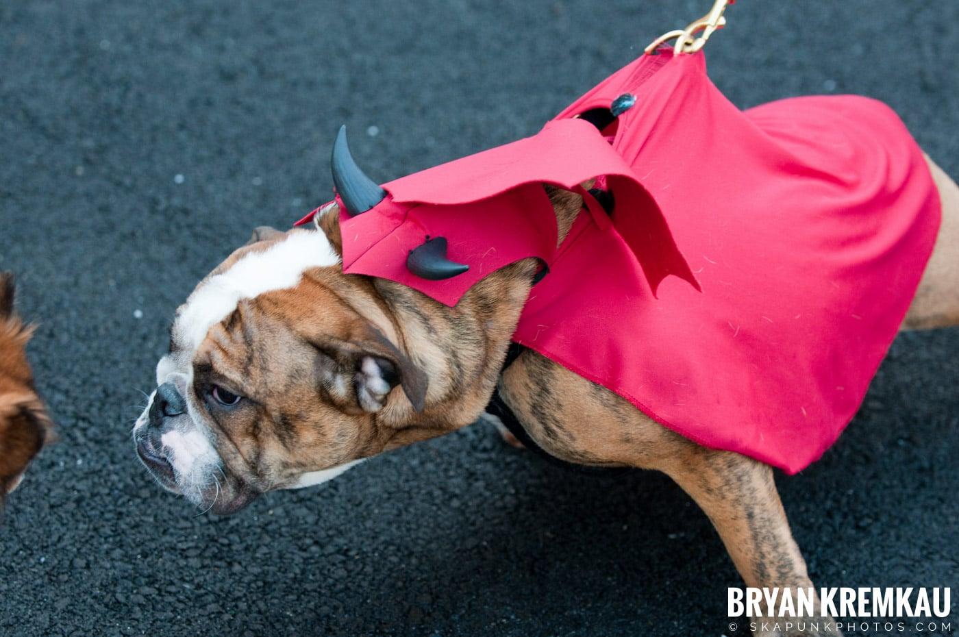 Paulus Hook Halloween Pet Parade 2011 @ Jersey City, NJ - 10.30.11 (55)