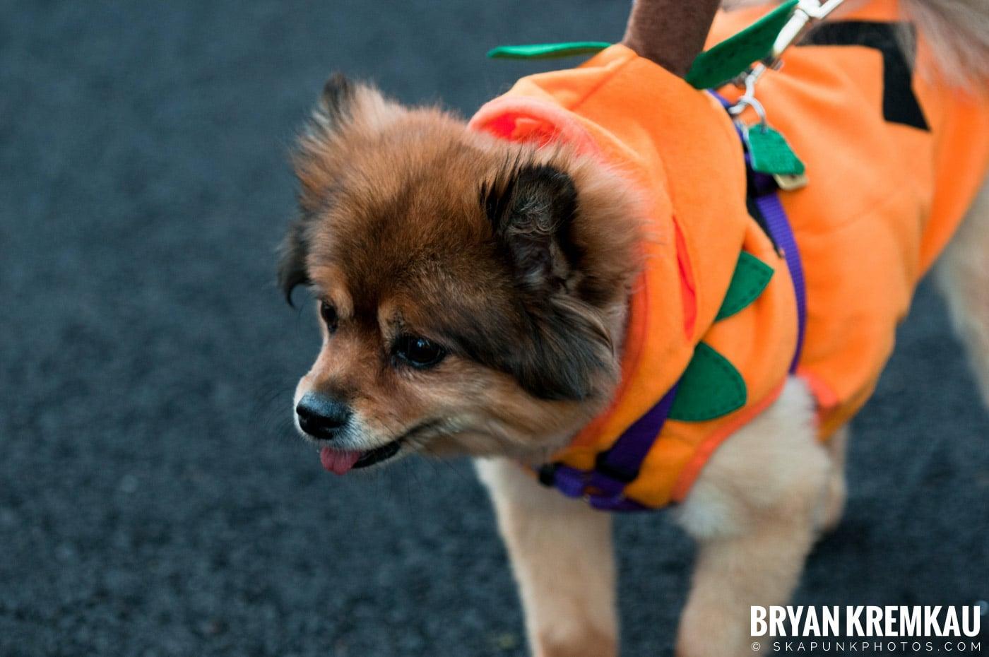 Paulus Hook Halloween Pet Parade 2011 @ Jersey City, NJ - 10.30.11 (53)
