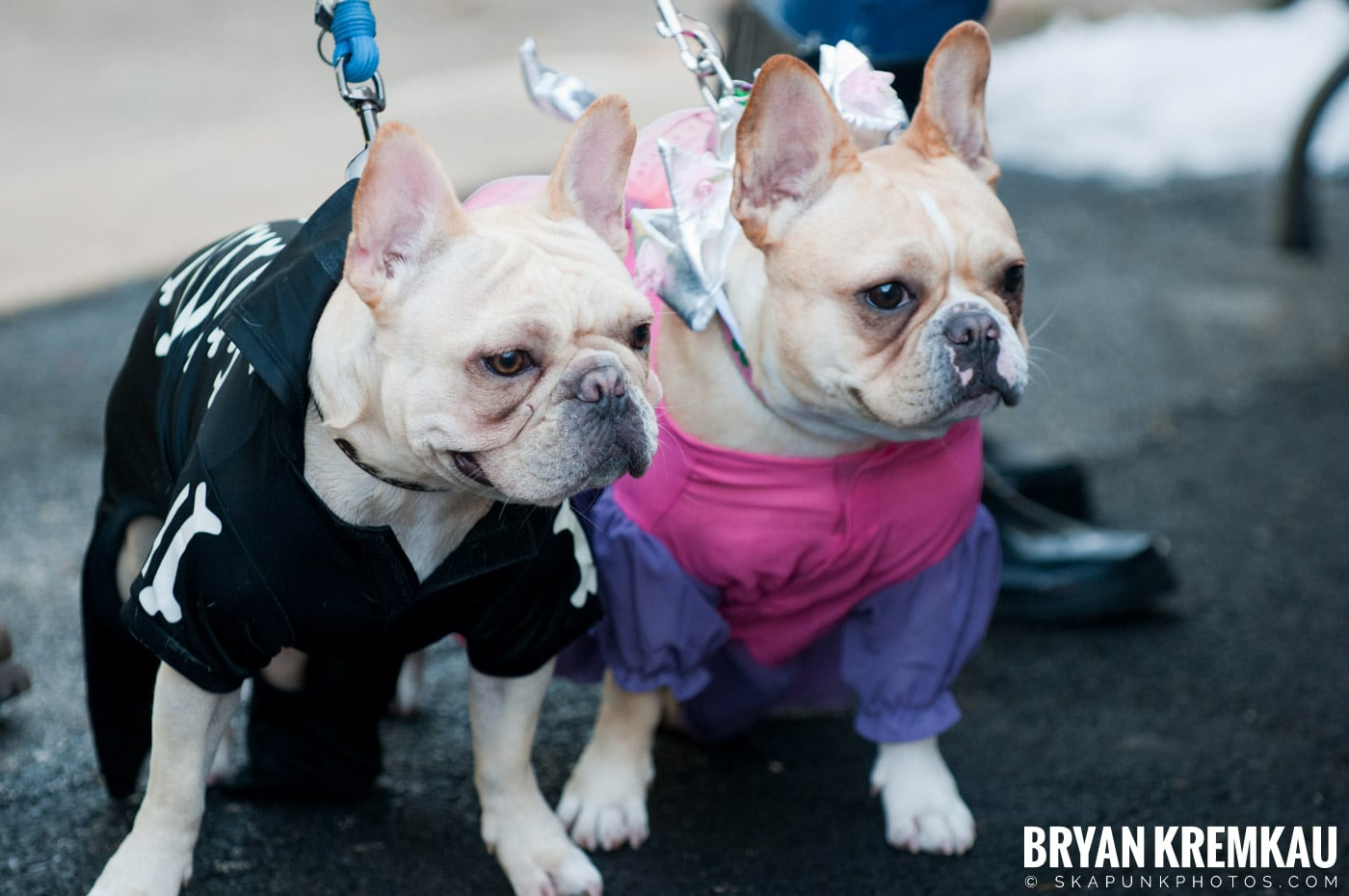 Paulus Hook Halloween Pet Parade 2011 @ Jersey City, NJ - 10.30.11 (51)
