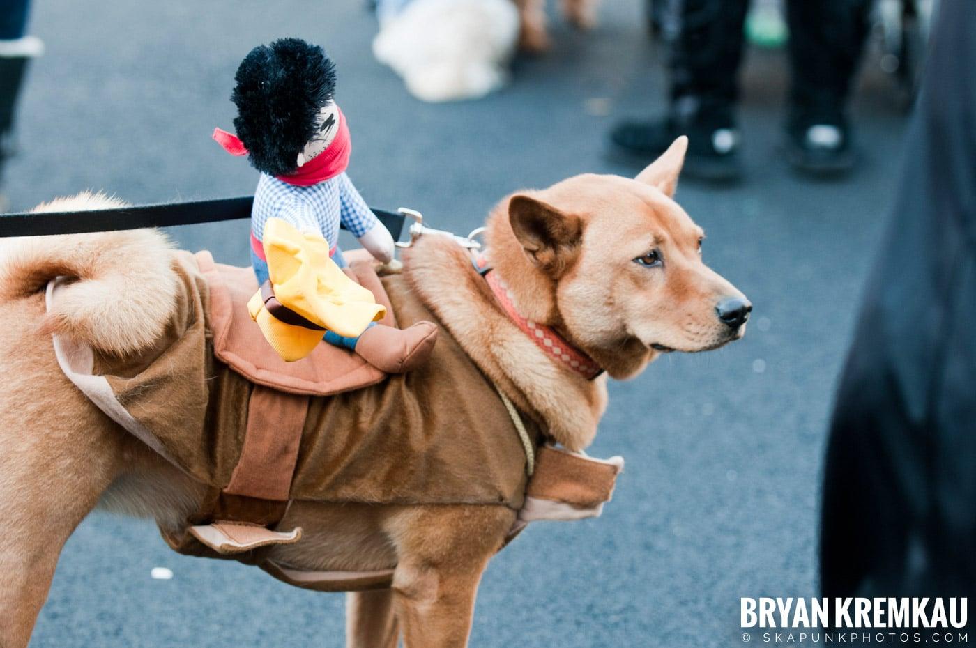 Paulus Hook Halloween Pet Parade 2011 @ Jersey City, NJ - 10.30.11 (49)