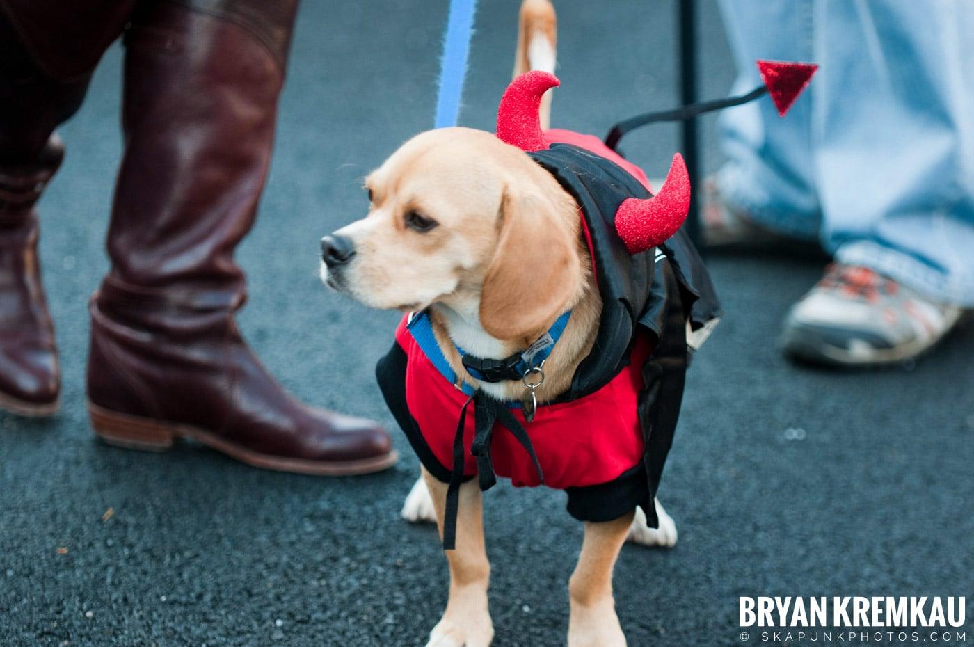 Paulus Hook Halloween Pet Parade 2011 @ Jersey City, NJ - 10.30.11 (47)