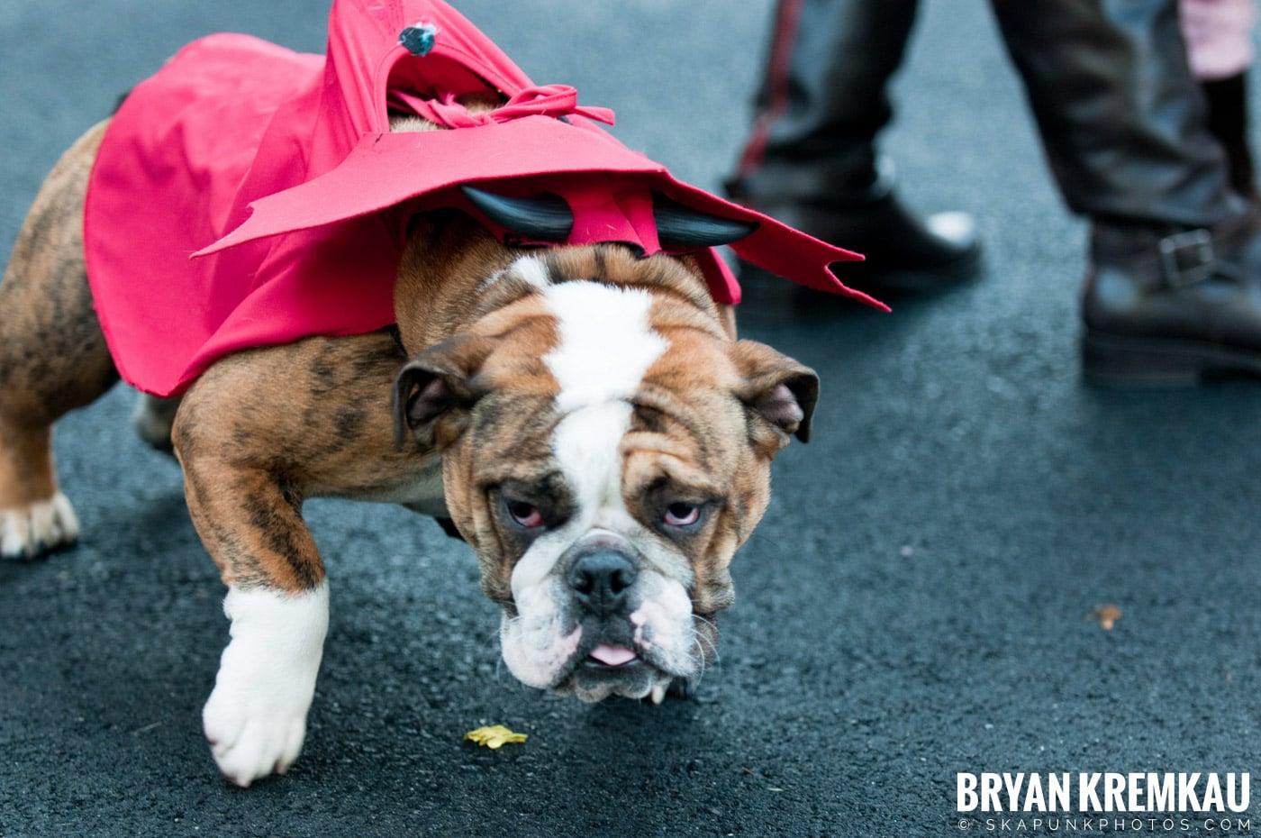 Paulus Hook Halloween Pet Parade 2011 @ Jersey City, NJ - 10.30.11 (44)