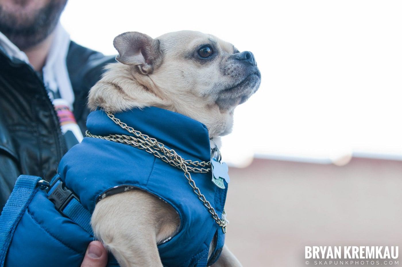 Paulus Hook Halloween Pet Parade 2011 @ Jersey City, NJ - 10.30.11 (42)