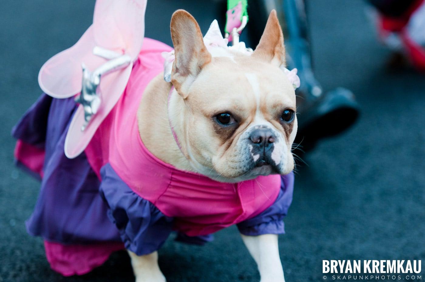 Paulus Hook Halloween Pet Parade 2011 @ Jersey City, NJ - 10.30.11 (41)