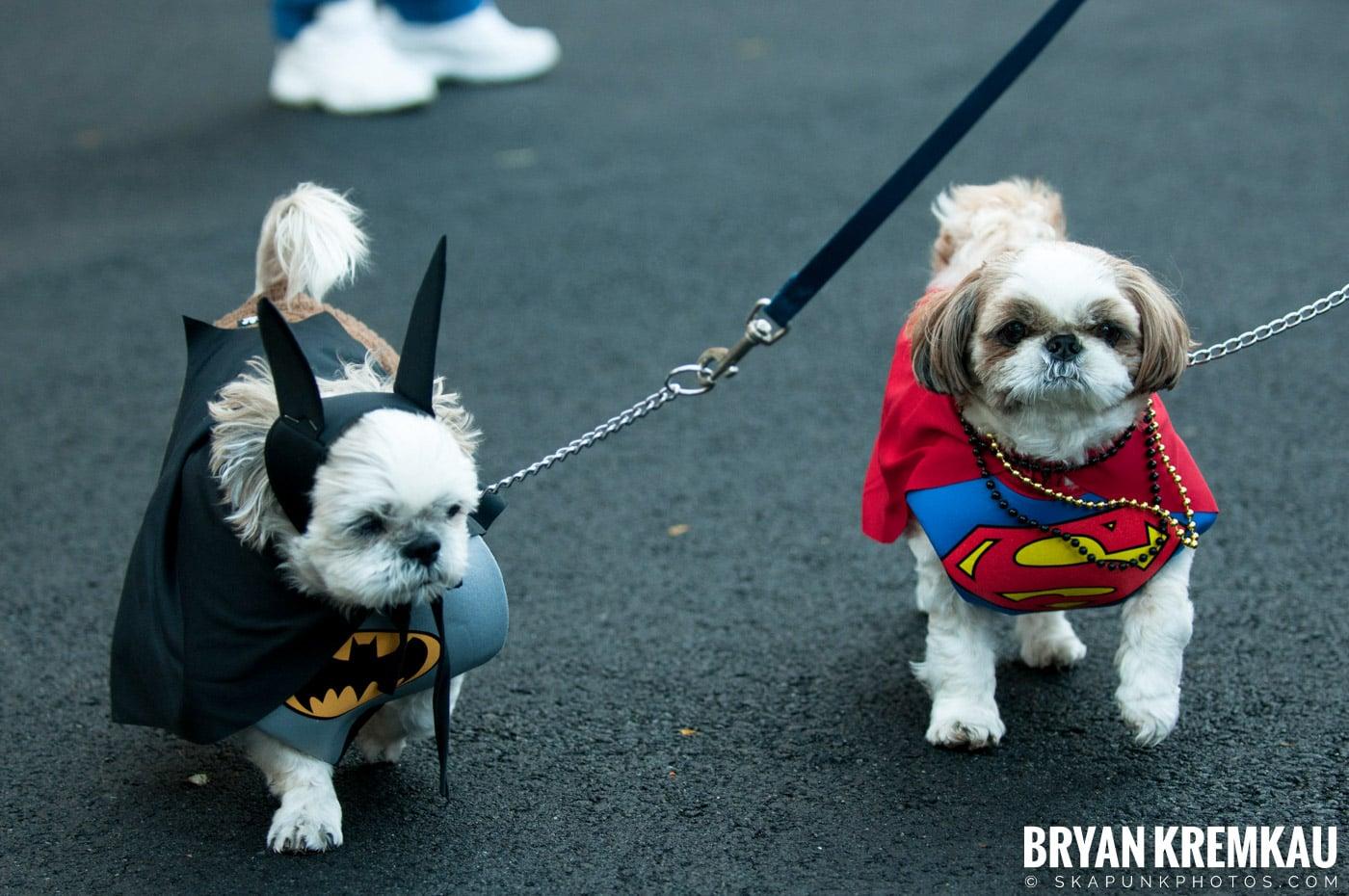 Paulus Hook Halloween Pet Parade 2011 @ Jersey City, NJ - 10.30.11 (40)