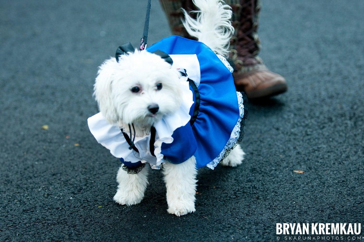 Paulus Hook Halloween Pet Parade 2011 @ Jersey City, NJ - 10.30.11 (39)