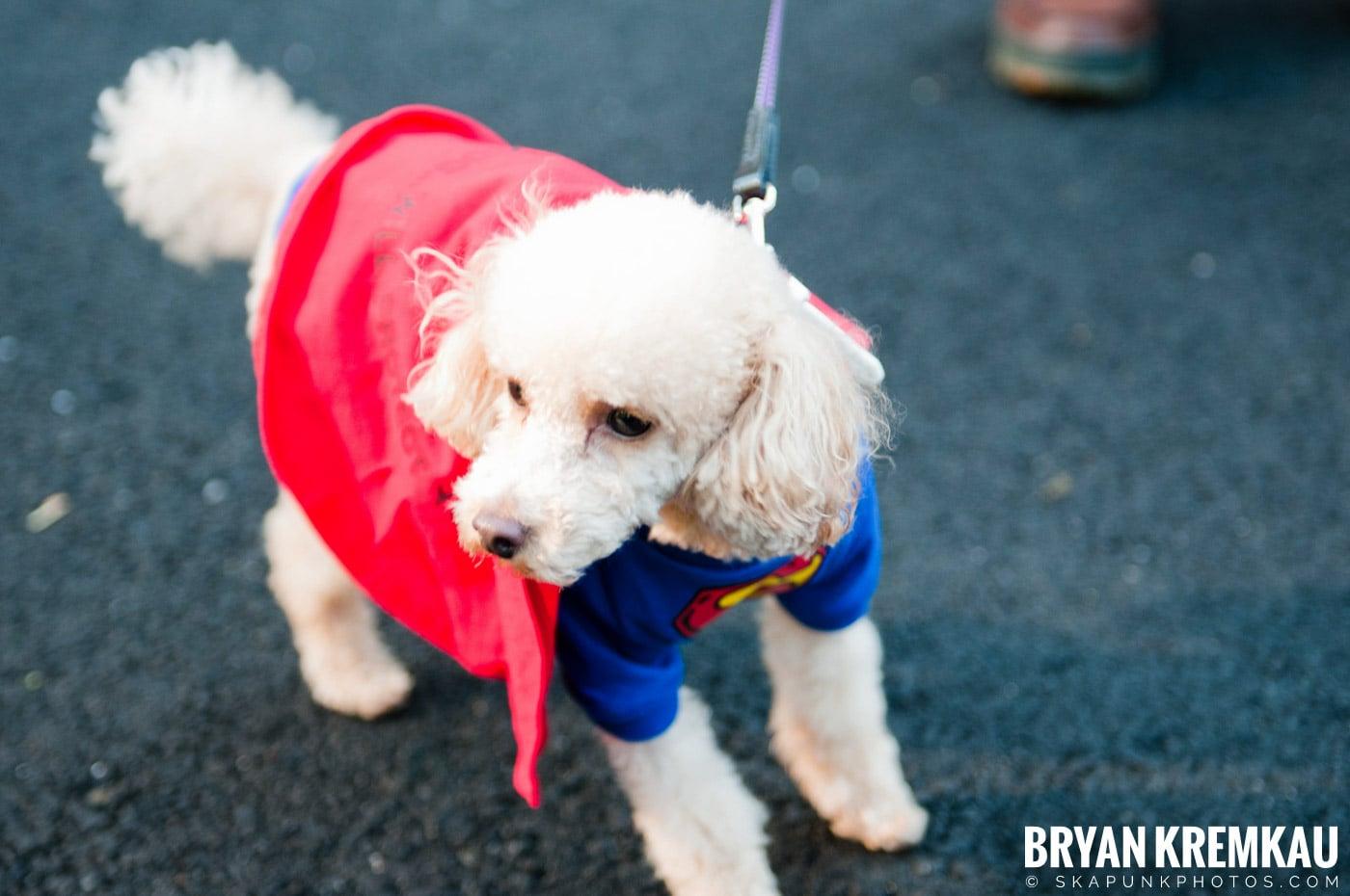 Paulus Hook Halloween Pet Parade 2011 @ Jersey City, NJ - 10.30.11 (38)