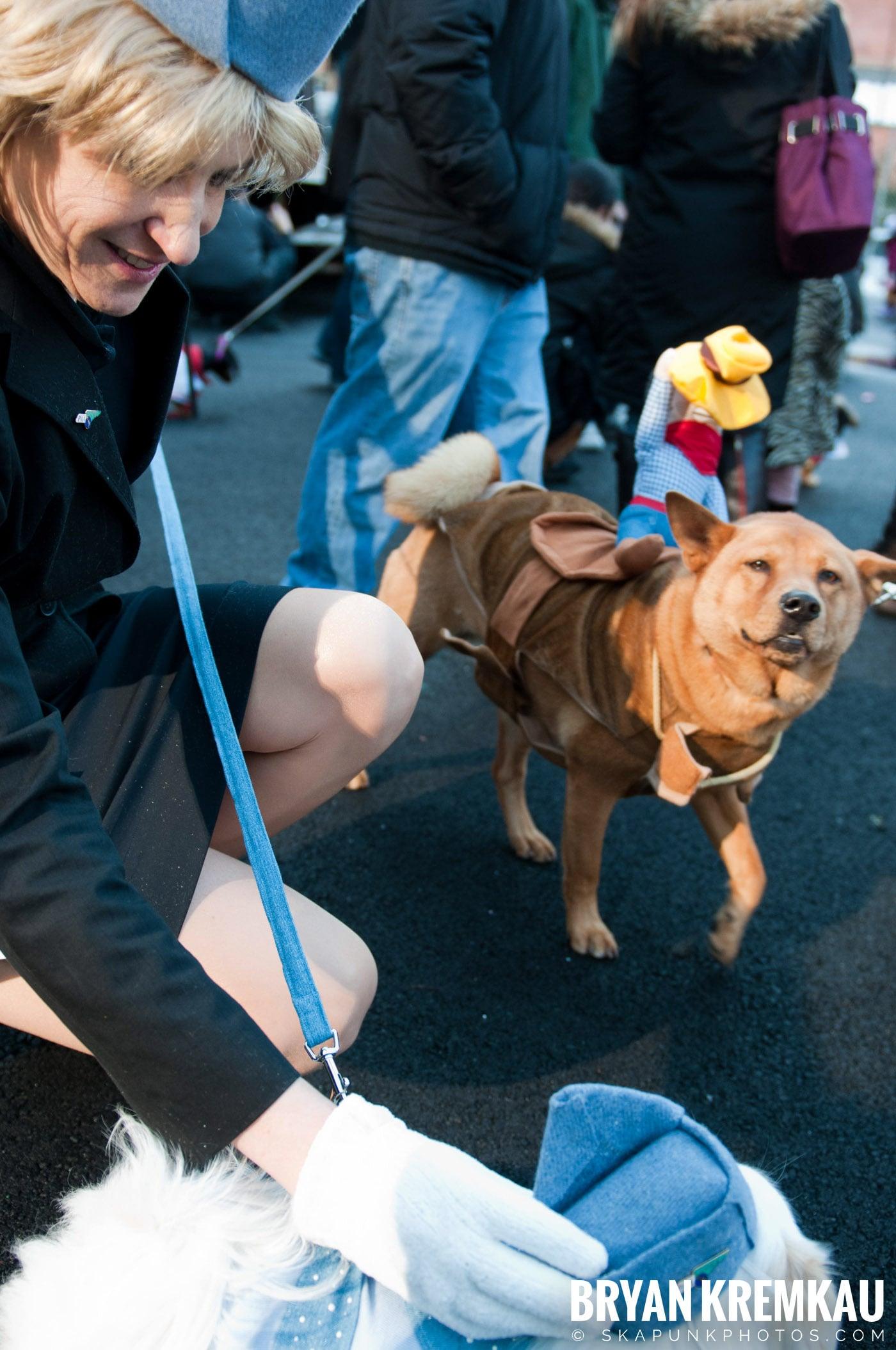 Paulus Hook Halloween Pet Parade 2011 @ Jersey City, NJ - 10.30.11 (37)