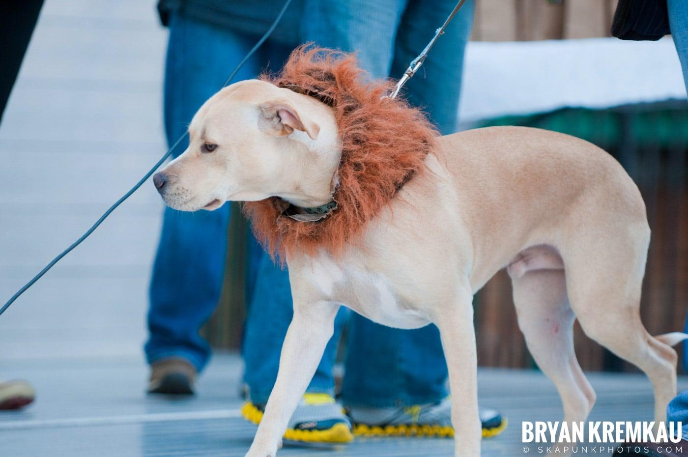 Paulus Hook Halloween Pet Parade 2011 @ Jersey City, NJ - 10.30.11 (33)