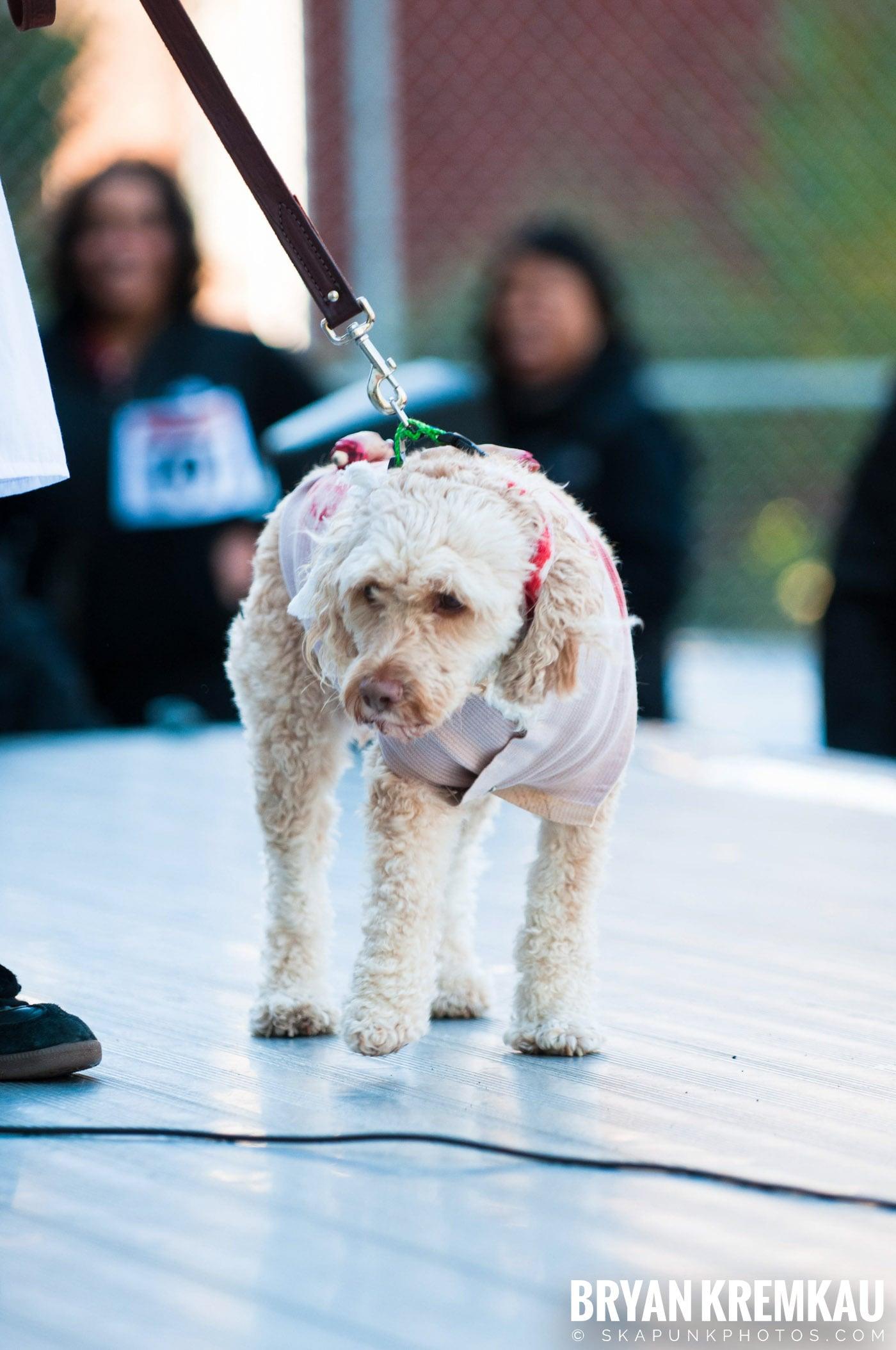 Paulus Hook Halloween Pet Parade 2011 @ Jersey City, NJ - 10.30.11 (28)