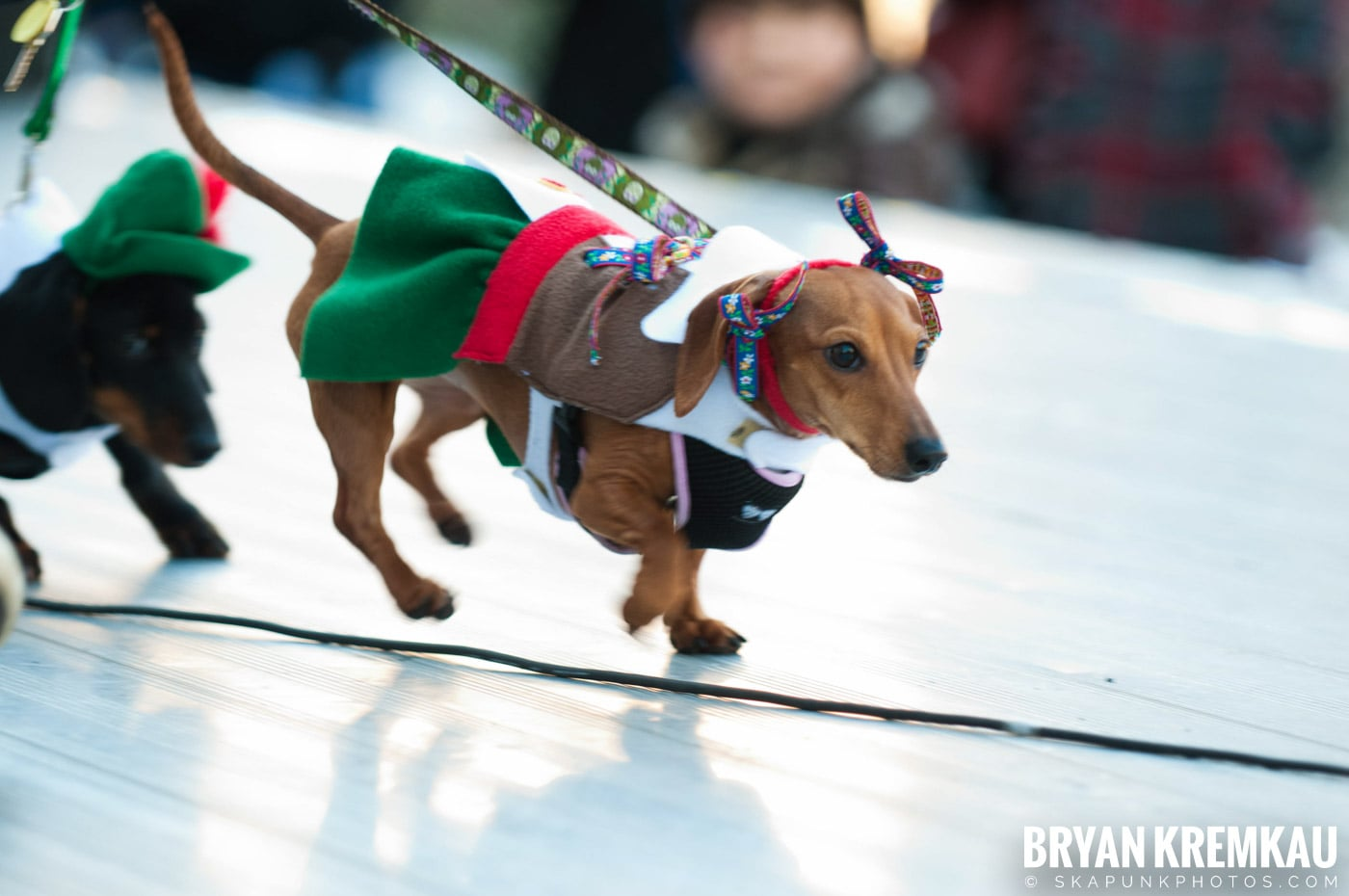 Paulus Hook Halloween Pet Parade 2011 @ Jersey City, NJ - 10.30.11 (27)