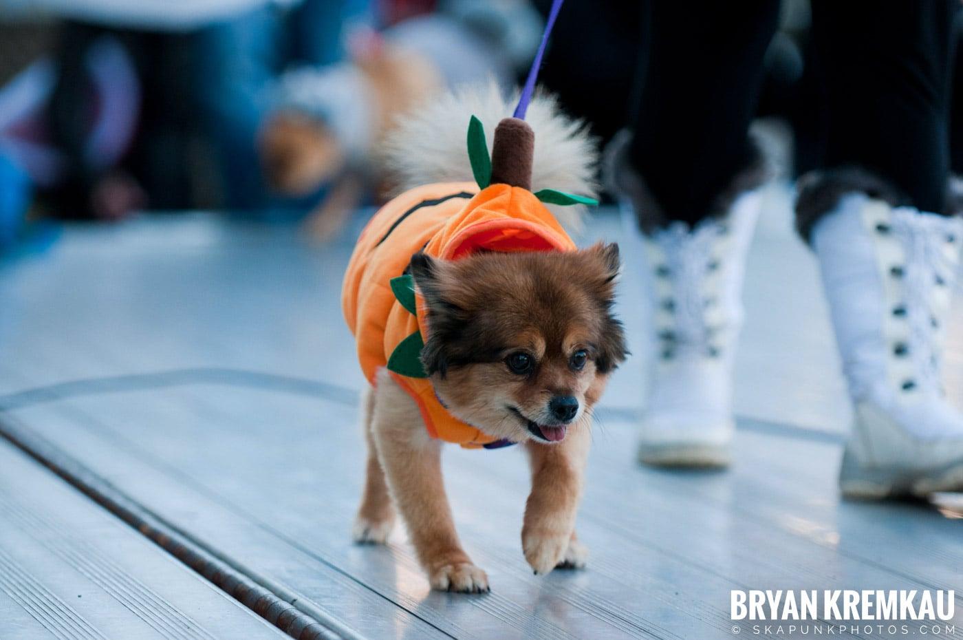 Paulus Hook Halloween Pet Parade 2011 @ Jersey City, NJ - 10.30.11 (22)